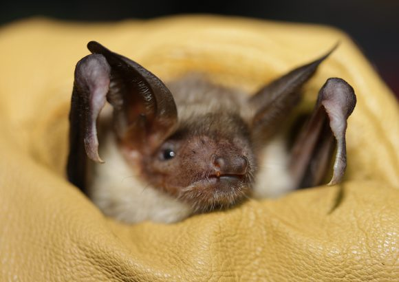 "LIFE program project of EU: ""Bats and men – Sharing LIFE under one roof"""
